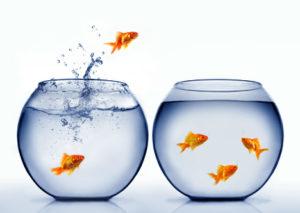 career transition to digital marketing